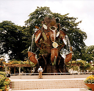 THE MADAGASCAN MAN-EATING TREE - MORE THAN JUST A MONSTROUS MYTH? 26