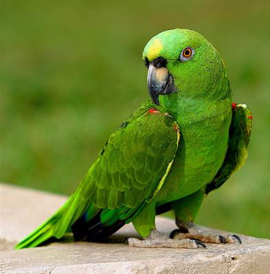 %D8%B7%D9%8A%D9%88%D8%B12 صور رمانسية طبيعية لأجمل الطيور 2014