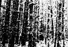 Poema El Bosque Escrito  SENTIR LA POESÍA