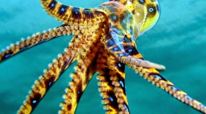 5 Haiwan Laut Paling Berbisa Di Dunia