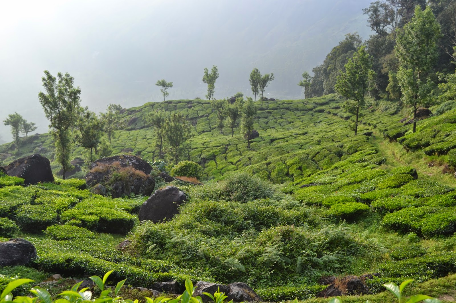 A Trip To Kerala And Munnar India