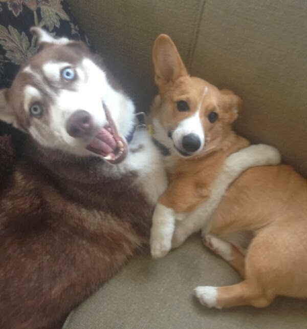 Cute dogs (50 pics), dog pictures, husky and dog pose