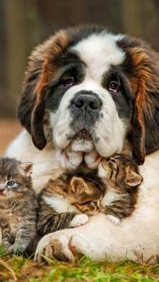 Proteção aos animais