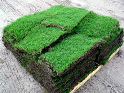 Image Result For Yard Fertilizer Schedule