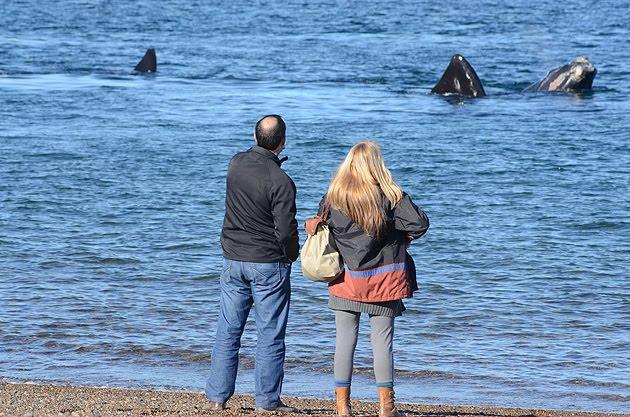Walvissen kijken Patagonië Argentinië