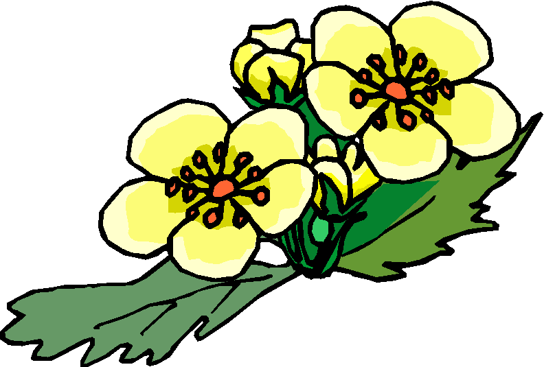Three Yellow Flower Clipart
