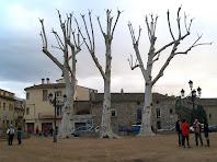 Uns imponents plàtans presideixen la Plaça Joan Ragué de Gualba