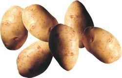 Patatesin anavatanı