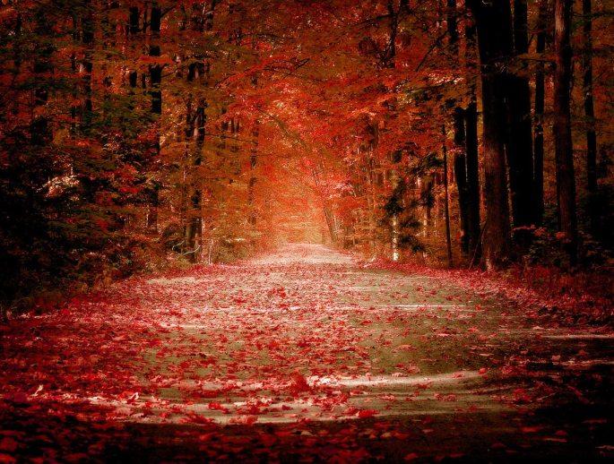 Autumn_Road.jpg