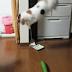 Penjelasan Ilmiah Mengapa Kucing 'Takut' Sama Timun