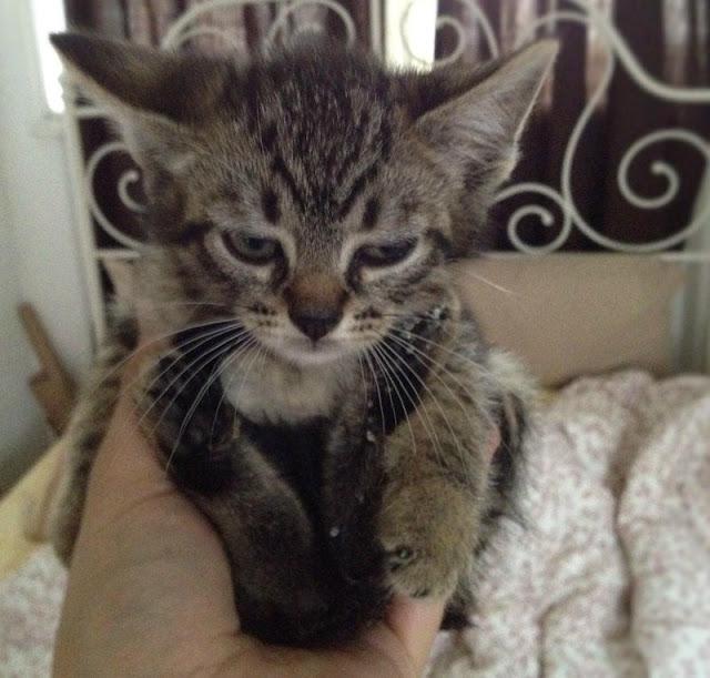 cat pictures, cat photos, kitten