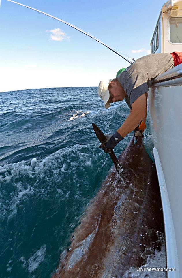 International fishing news 2012 09 for Fishing charters falmouth ma