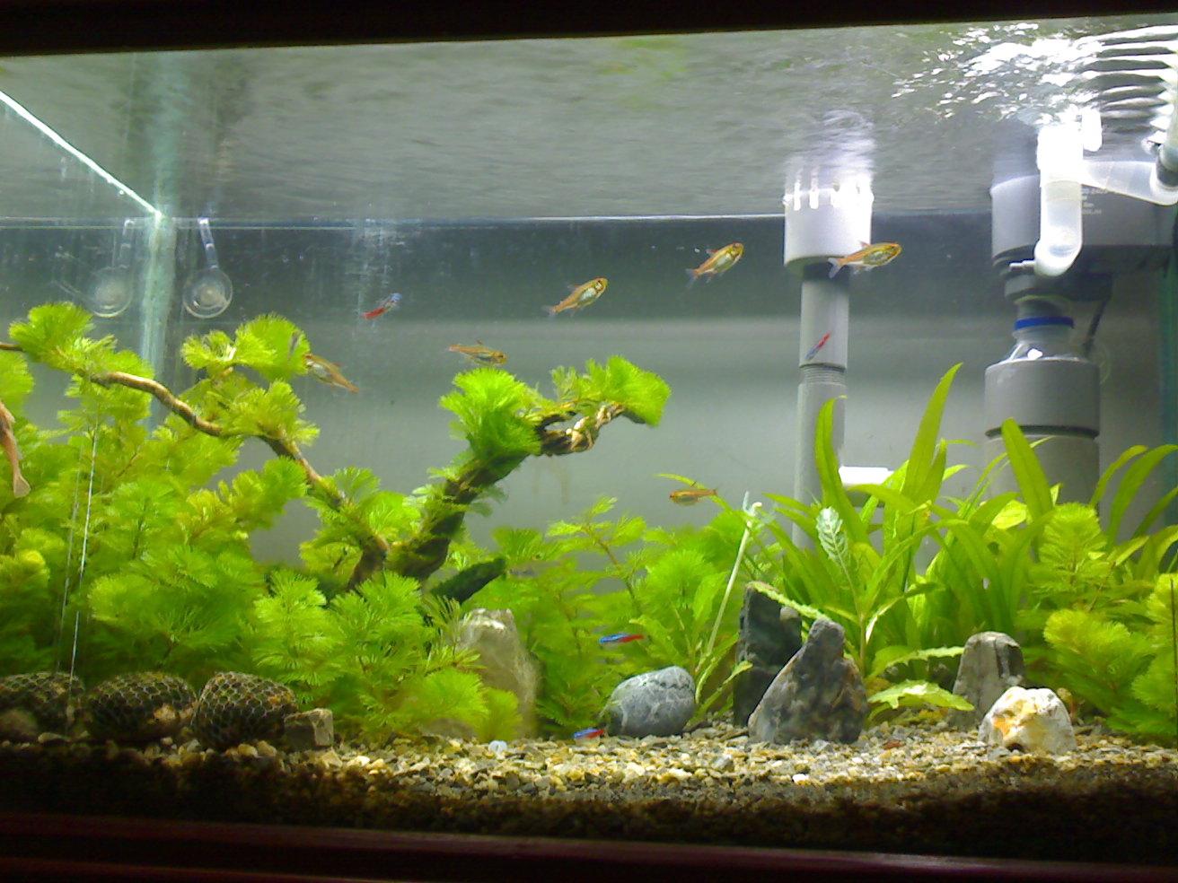 Aquascape padang - Gambar aquascape ...