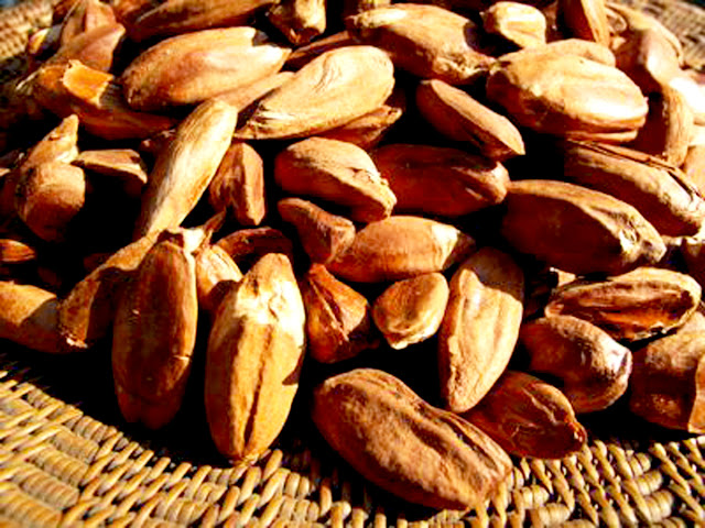 Local Market Tool >> Mambulaoans WorldWide Buzz: DTI: Bicol Pili included in ...