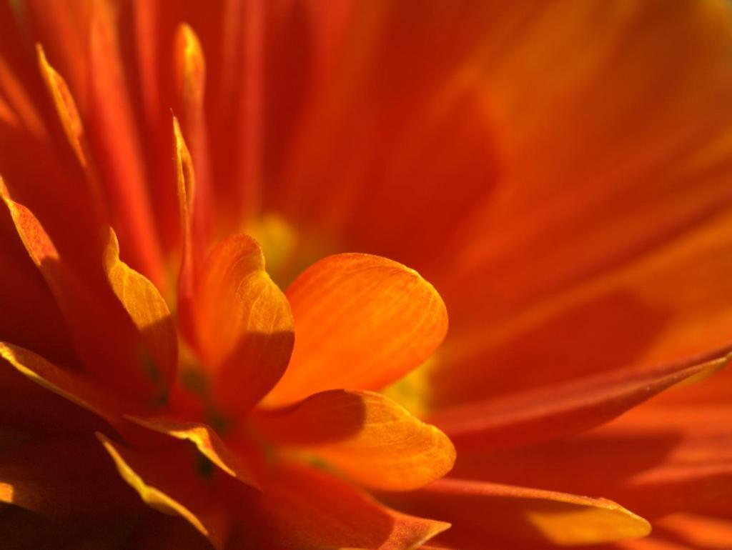 Krystina Dizayas Blog: orange flower hd
