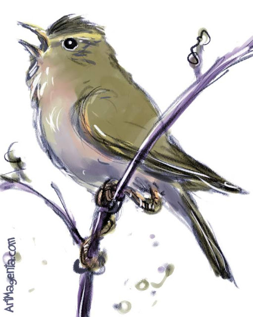 Marsh Warbler sketch painting. Bird art drawing by illustrator Artmagenta.