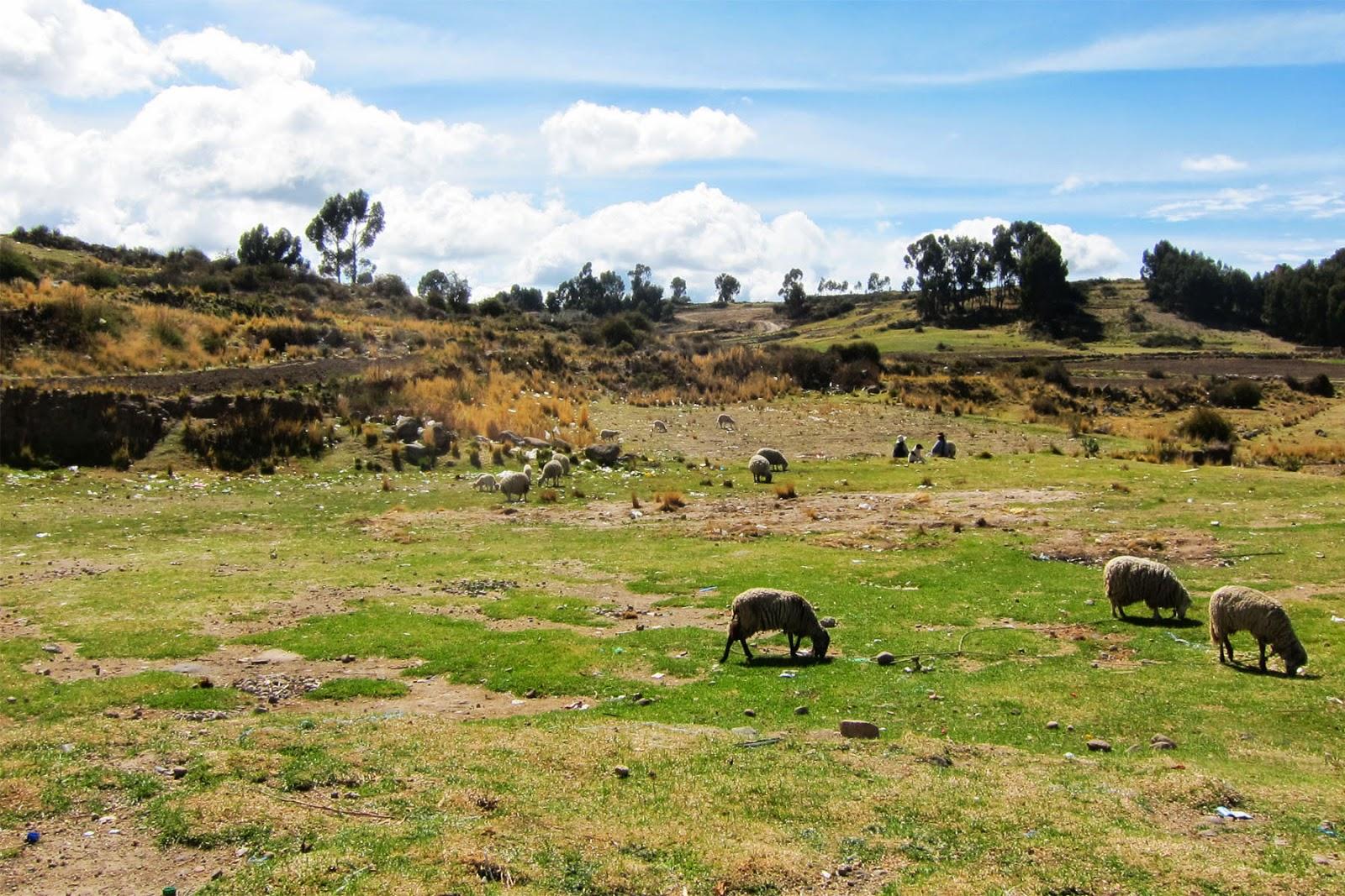 Somewhere in Peru, 2014