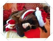 Boxer Amy als Weihnachtsfrau