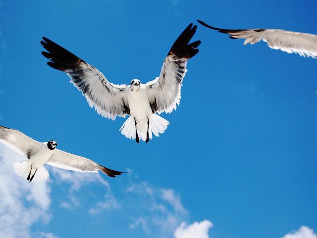 تصوير طيور بطيئة التحليق
