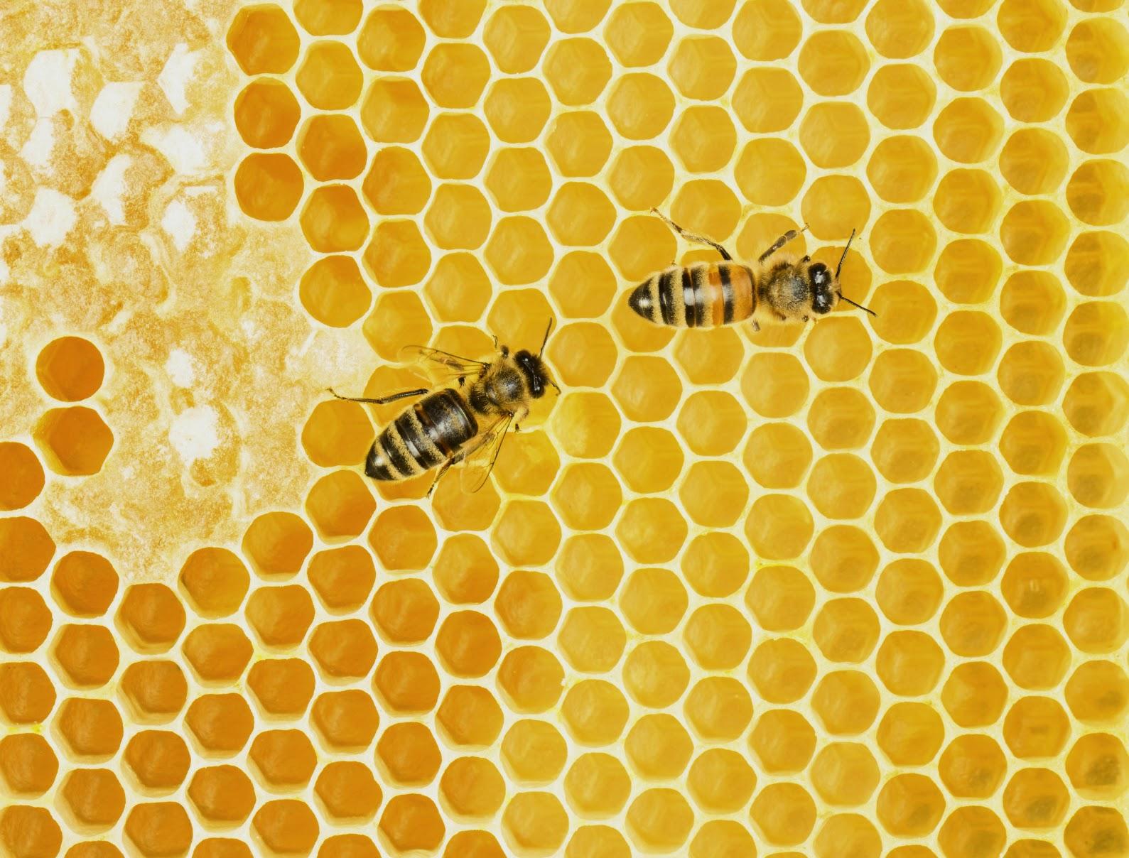 beekeeping for beginners beekeeping supplies you need to get