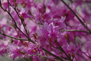 八ケ岳花街道ブログへ。こちらの写真もどうぞ。