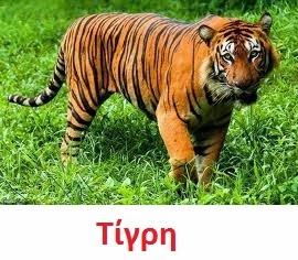 https://dl.dropboxusercontent.com/u/72794133/%CE%96%CE%A9%CE%91/Tiger2.wav