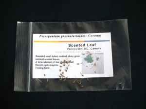 Free Scented Pelargonium Grossularioides seeds
