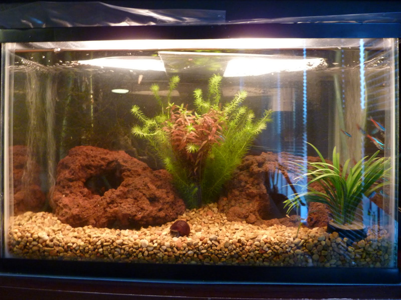 Over the next year, I switched up the tank a bit. I swapped the 5 ...