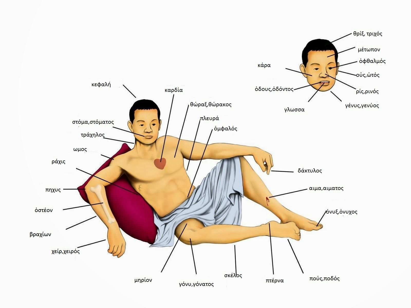 CLÁSICOS GOYA: Partes del cuerpo humano
