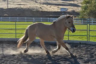 Extended horse trot