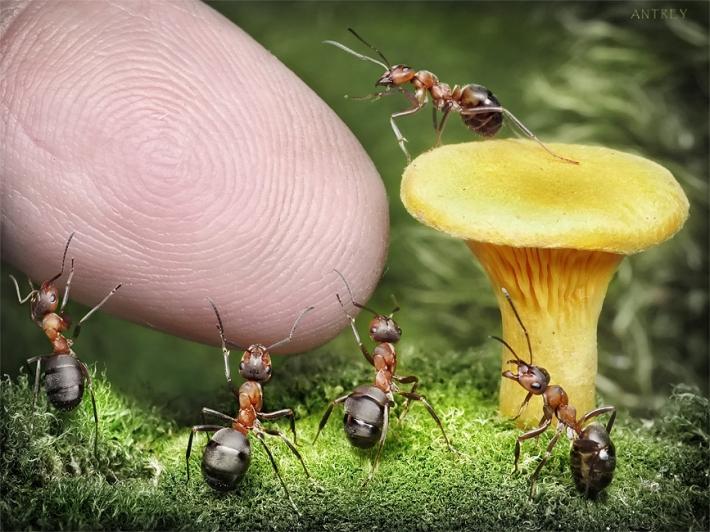 Imagem de Formigas  mao