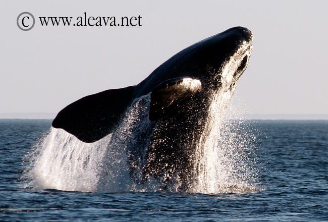 Whale Watching from Puerto Madryn to Puerto Piramides