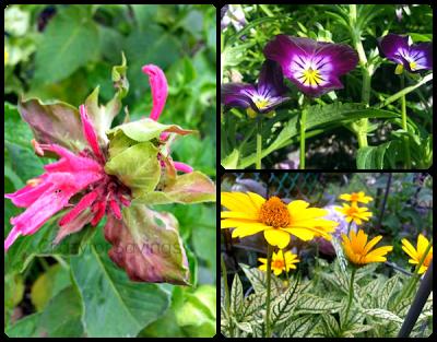 cfi summer 2013 garden