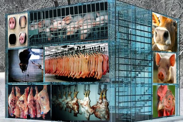 an argument against the meat industry How to win an argument with a meat eater  the hunger-argument against meat-eating  the livestock industry attempts to control this disease by feeding the .