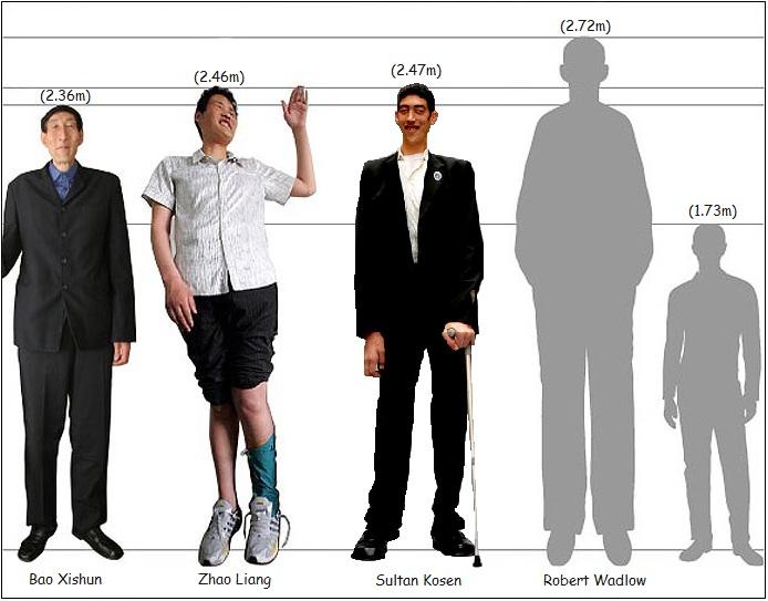 ¿Cuánto mide Robert Wadlow? Comp