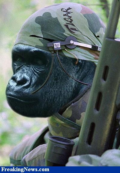 Biggest Gorilla Ever Recorded World+racord+man+(4).jpg