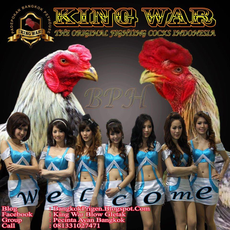 3 Pondasi Ayam Bangkok Petarung Tangguh Stamina Bagus