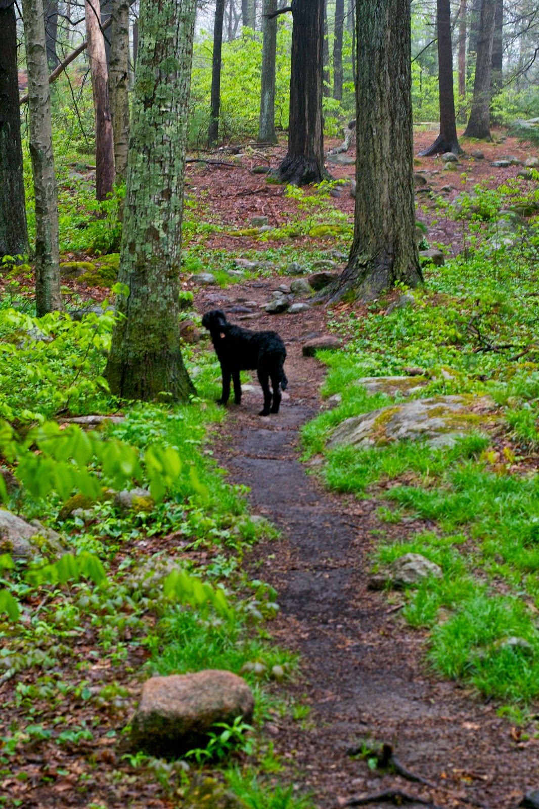 Veda waiting ahead on the trail.