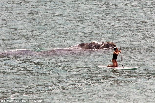 Wanita sedang mendayung di laut tak sedar ada makhluk besar di belakangnya