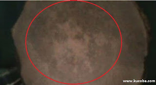 Gambar Wajah Aneh Di Batang Pohon Kelapa