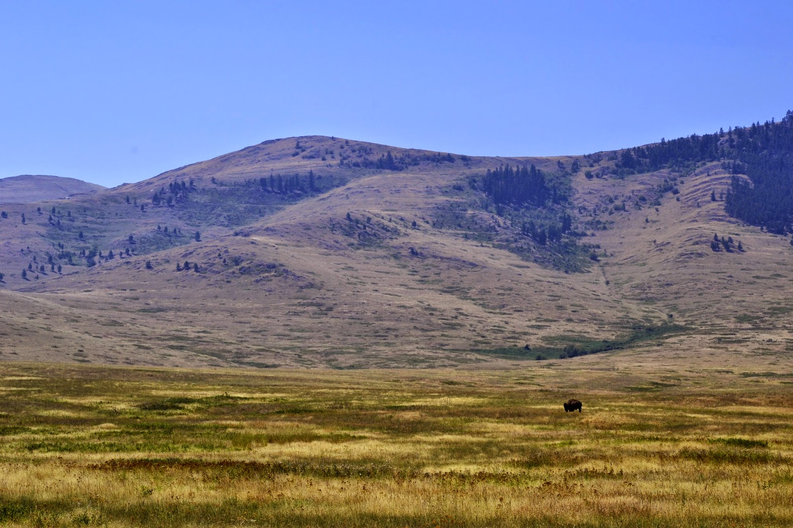 Expansive views in the National Bison Range, Montana