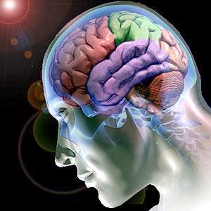 Cérebro humano, cérebro, celebro, partes do cérebro.