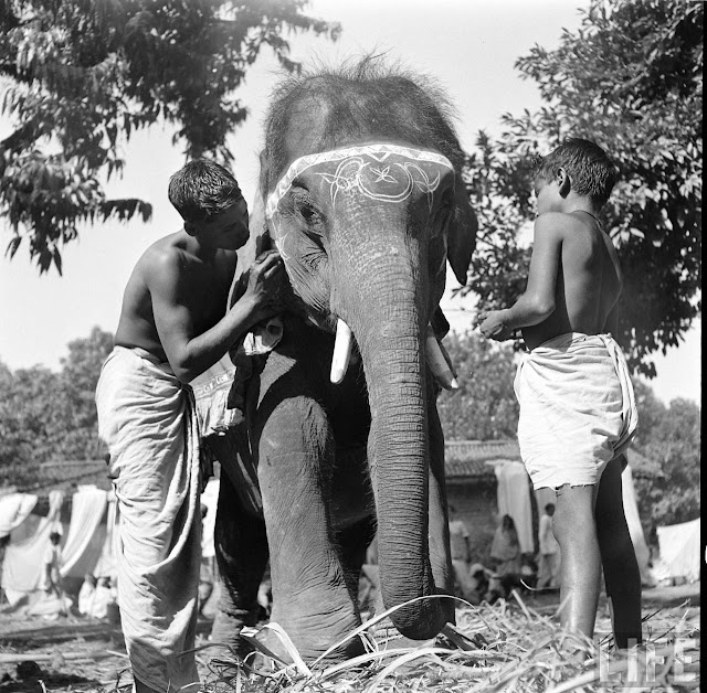 Elephants+in+Sonepur+Cattle+Fair+in+Bihar+-+1952+%252899%2529