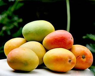 variety of mango