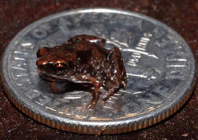أصغر الحيوانات في العالم 13.jpg