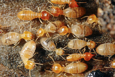 How To Get Rid Of Termites,