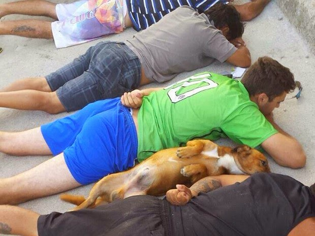 Policial rende traficantes e cachorrinho rende-se junto com os bandidos