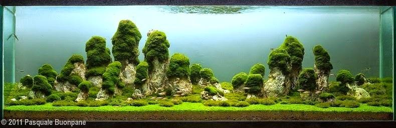 acuarios impresionantes