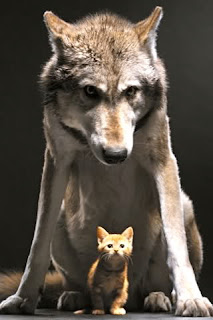 wolf-and-cat-f.jpg