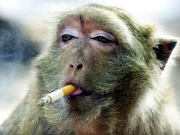 Auguri Anno della Scimmia